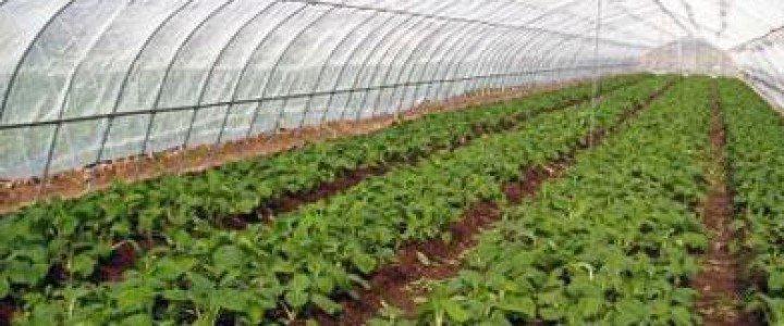 Curso gratis Instalaciones, su acondicionamiento, limpieza y desinfección. AGAH0108 - Horticultura y floricultura online para trabajadores y empresas