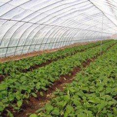 Instalaciones, su acondicionamiento, limpieza y desinfección. AGAH0108 - Horticultura y floricultura