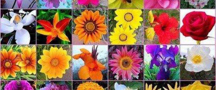 Curso gratis Introducción a las flores de Bach online para trabajadores y empresas