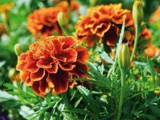 Aplicación de métodos de control fitosanitarios en plantas, suelo e instalaciones. AGAC0108 - Cultivos herbáceos
