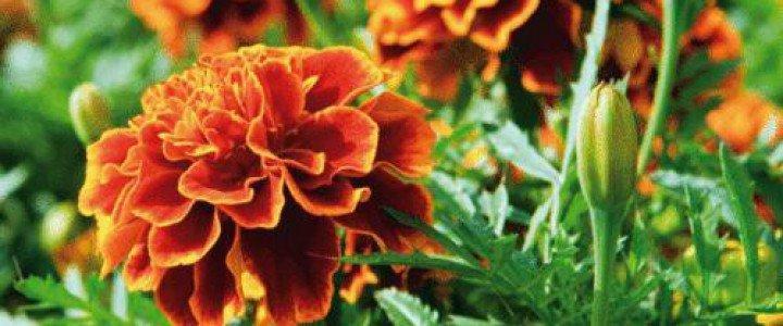 Aplicación de métodos de control fitosanitarios en plantas, suelo e instalaciones. AGAH0108 - Horticultura y floricultura