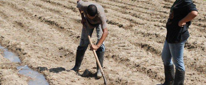 Curso gratis MF0517_1 Operaciones Auxiliares de Preparación del Terreno, Plantación y Siembra de Cultivos Agrícolas online para trabajadores y empresas