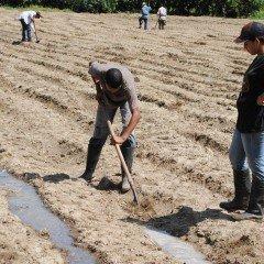 MF0517_1 Operaciones Auxiliares de Preparación del Terreno, Plantación y Siembra de Cultivos Agrícolas