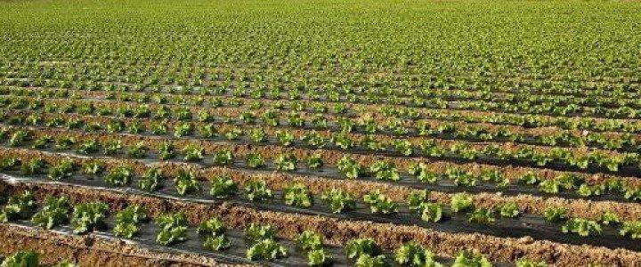 Curso gratis MF0519_1 Operaciones Culturales en los Cultivos y de Mantenimiento de Instalaciones en Explotaciones Agrícolas online para trabajadores y empresas