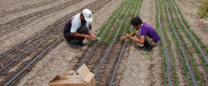 Curso gratis MF0523_2 Preparación del Terreno, Siembra y Trasplante en Cultivos Herbáceos online para trabajadores y empresas