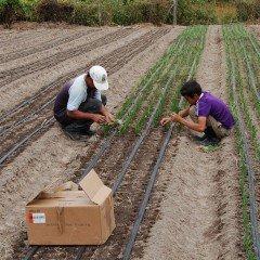 MF0523_2 Preparación del Terreno, Siembra y Trasplante en Cultivos Herbáceos