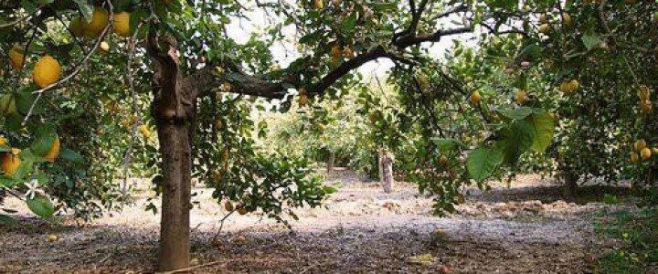 MF0527_2 Preparación del Terreno y Plantación de Frutales