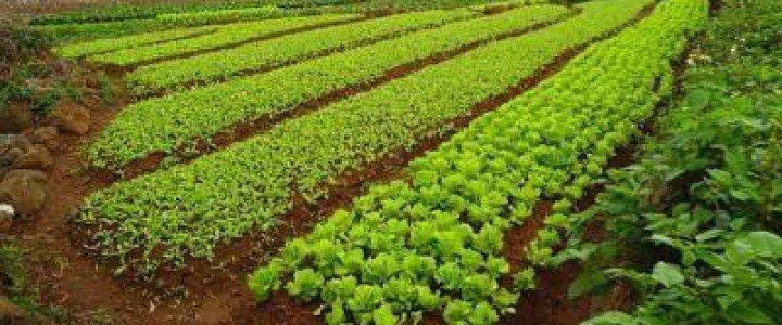 Curso gratis MF0529_2 Preparación del Terreno y Siembra y/o Trasplante en Cultivos Hortícolas y Flor Cortada online para trabajadores y empresas
