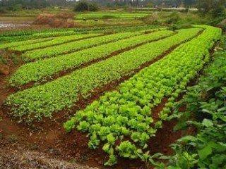 MF0529_2 Preparación del Terreno y Siembra y/o Trasplante en Cultivos Hortícolas y Flor Cortada