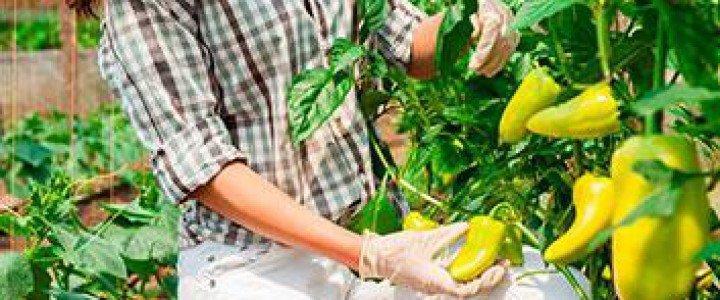 Curso gratis MF0530_2 Operaciones Culturales y Recolección en Cultivos Hortícolas y Flor Cortada online para trabajadores y empresas