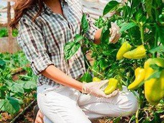 MF0530_2 Operaciones Culturales y Recolección en Cultivos Hortícolas y Flor Cortada