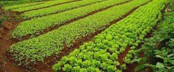 MF0531_2 Instalación de Jardines y Zonas Verdes