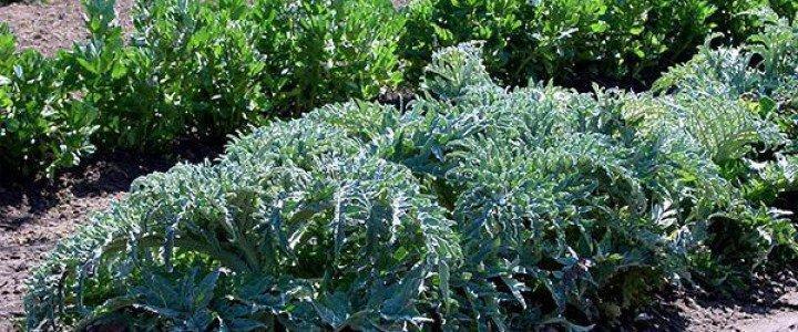 Curso gratis MF0718_2 Prevención y Manejo de la Sanidad del Agroecosistema online para trabajadores y empresas