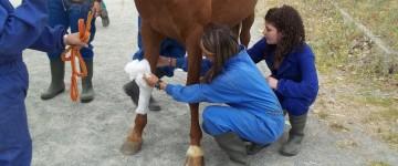 MF0719_2 Alimentación, Manejo General y Primeros Auxilios al Ganado Equino