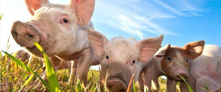 MF0754_2 Operaciones y Control de Almacén de Productos para la Alimentación Animal