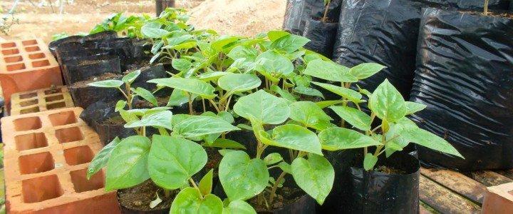 Curso gratis MF1479_2 Propagación de Plantas en Vivero online para trabajadores y empresas