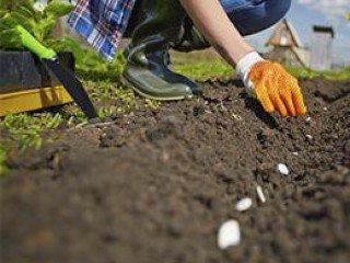 MF1480_2 Cultivo de Plantas y Tepes en Vivero