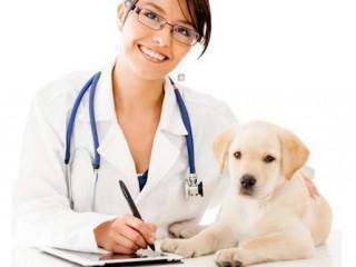 MF1585_3 Operaciones de Atención al Cliente, Venta y Administración en Centros Veterinarios