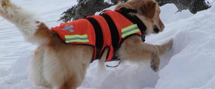 Curso gratis MF1757_3 Adiestramiento de Perros para Detección, Búsqueda, Salvamento y Rescate de Víctimas online para trabajadores y empresas