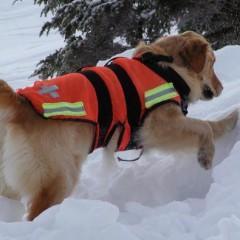 MF1757_3 Adiestramiento de Perros para Detección, Búsqueda, Salvamento y Rescate de Víctimas