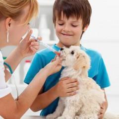 Ayudante Técnico Veterinario (A.T.V.)