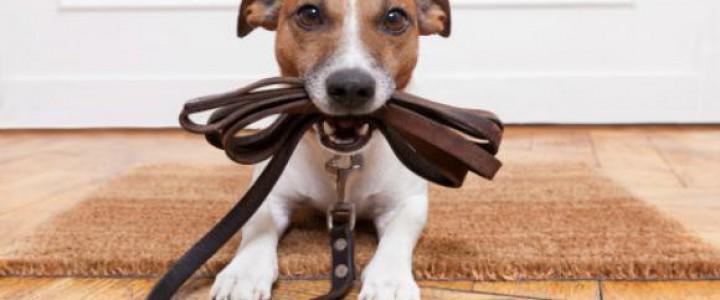 Curso gratis SEAD0512 Instrucción Canina en Operaciones de Seguridad y Protección Civil online para trabajadores y empresas