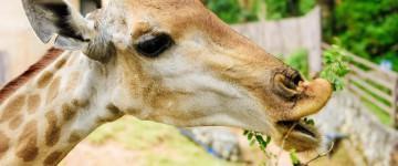 Técnico Auxiliar de Veterinaria en Zoológicos