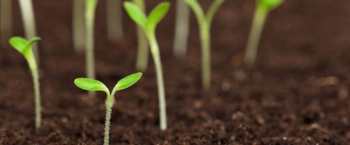 Curso gratis Técnico Profesional en Medioambiente y Gestión Forestal online para trabajadores y empresas