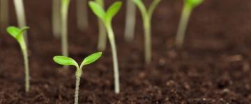 Técnico Profesional en Medioambiente y Gestión Forestal
