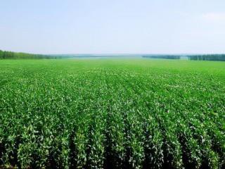 UF0002 Preparación del Terreno para Instalación de Infraestructuras, Siembra y Plantación de Cultivos Herbáceos