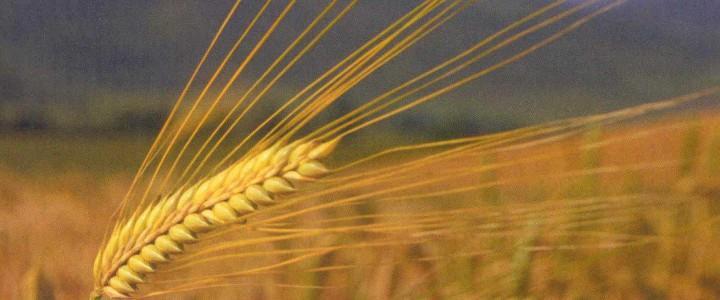 Curso gratis UF0004 Recolección de Cultivos Herbáceos online para trabajadores y empresas