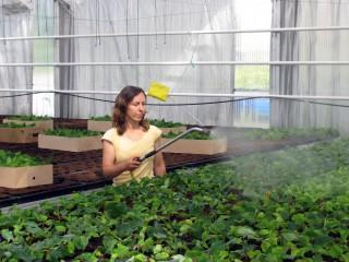 UF0006 Determinación del Estado Sanitario de las Plantas, Suelo e Instalaciones y Elección de los Métodos de Control