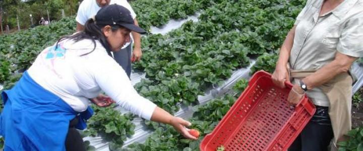 Curso gratis UF0013 Recolección, Transporte, Almacenamiento y Acondicionamiento de la Fruta online para trabajadores y empresas
