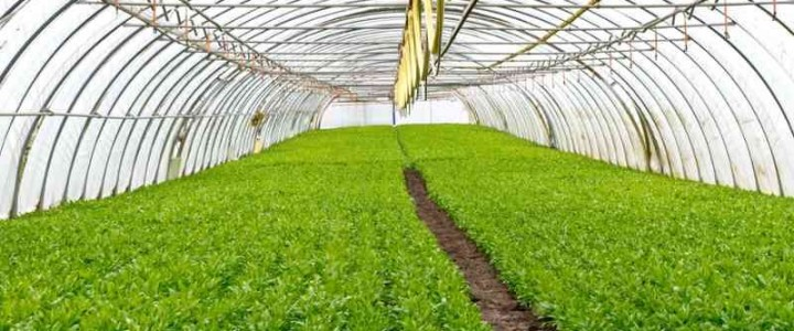 Curso gratis UF0161 Operaciones Auxiliares de Abonado y Aplicación de Tratamientos en Cultivos Agrícolas online para trabajadores y empresas
