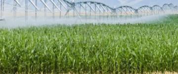 UF0209 Labores Culturales y Recolección de los Cultivos Ecológicos