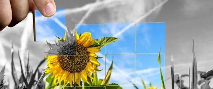 UF0279 Evaluación de la Viabilidad Económica de Nuevos Productos y Servicios de Floristería