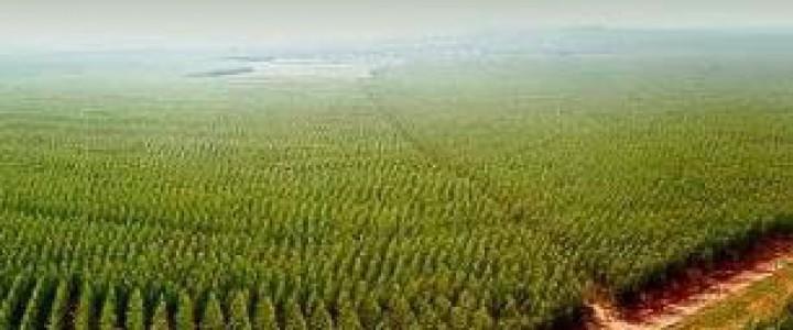 Curso gratis UF0699 Implantación de Especies Forestales online para trabajadores y empresas