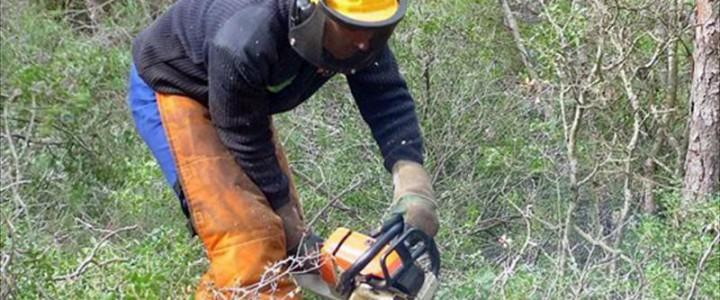 Curso gratis UF0700 Trabajos de Infraestructuras Forestales online para trabajadores y empresas