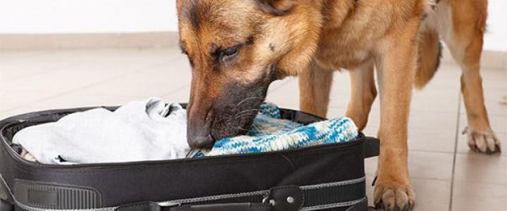 UF2740 Adiestramiento de Perros en Operaciones de Rastreo de Personas y/o Indicios Personales, sobre una Pista Olorosa o Sucesión de Huellas e Indicios Prefijada