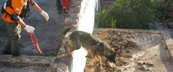 UF2741 Adiestramiento de Perros en Búsqueda y Localización de Personas mediante Venteo, en Estructuras Colapsadas e Interior de Edificios