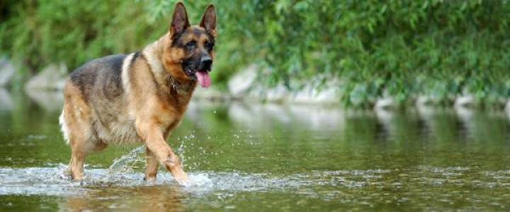UF2742 Adiestramiento de Perros en Búsqueda y Localización de Personas mediante Venteo, en Grandes Áreas