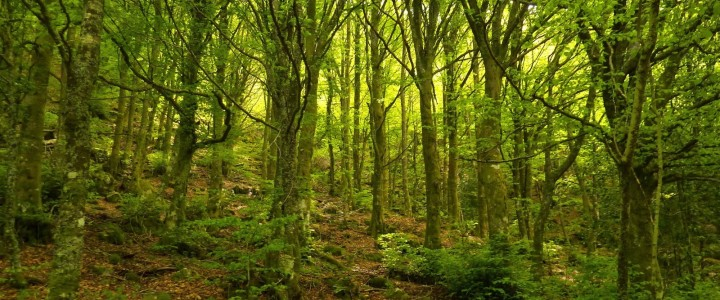 Curso gratis Perito Judicial en Medioambiente y Gestión Forestal online para trabajadores y empresas