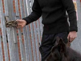Perito Judicial en Seguridad Privada con Unidad Canina