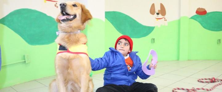 Curso gratis Monitor en Terapia Asistida con Perros online para trabajadores y empresas