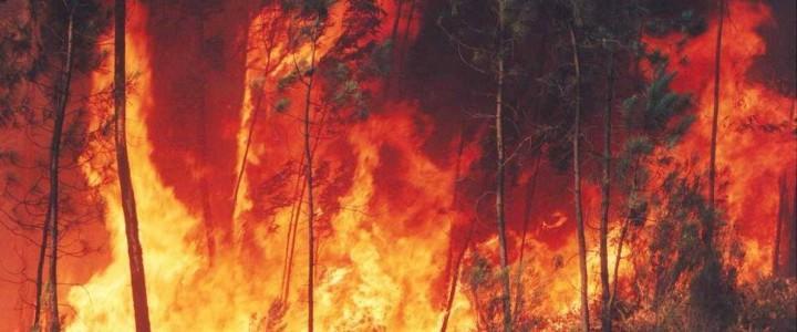 Curso gratis Experto en Prevención y Tratamiento de Incendios Forestales online para trabajadores y empresas