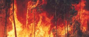 Experto en Prevención y Tratamiento de Incendios Forestales