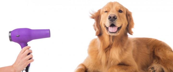 Curso gratis de Técnico en Peluquería Canina online para trabajadores y empresas