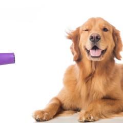 Curso de Técnico en Peluquería Canina