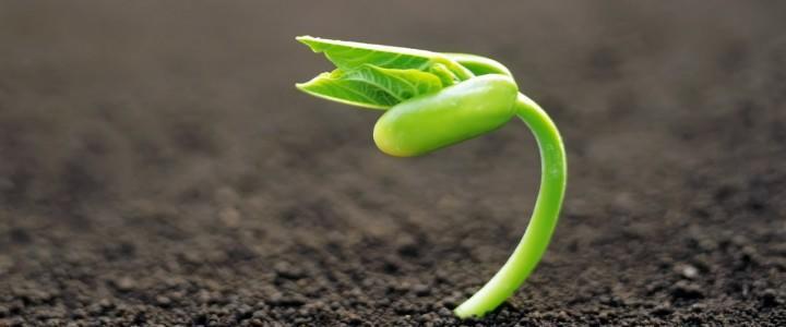 UF0967 Recolección de Frutos, Semillas, Plantas y Otros Productos Comercializables