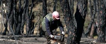 UF1264 Reforestación y Restauración Hidrológica